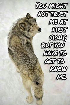 At first sight.......