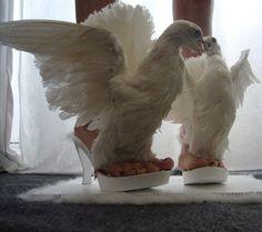 lo siento, jamás me pondría unos zapatos así. dios mío serán palomas disecadas????? cual será el límite?