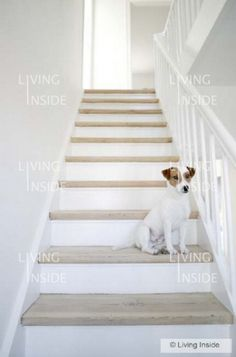 like the wood- basement stairs Cozy Basement, Basement House, Basement Stairs, Color Collage, Jack Russells, Photographs Of People, Basement Renovations, Jack Russell Terrier, Crafty Craft