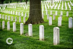 Arlington National Cemetery, Arlington country, USA -  orestegaspari.com