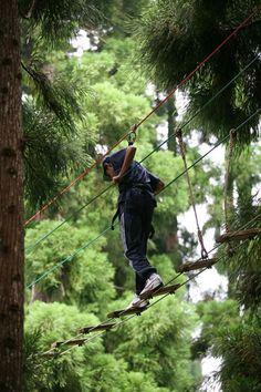 La Forêt de l'Aventure - Qui n'a pas rêvé un jour de faire «son Tarzan» et de voler d'arbre en arbre ? Les amateurs du célèbre cri de la jungle peuvent se lâcher sans retenue sur le parcours acrobatique de la Forêt de l'Aventure, situé sur la route du Maïdo dans la forêt de cryptomérias du Parc du Maïdo.