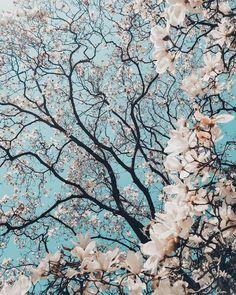 MADAGASCAR-Les arbres verts//Rose Chambre chêne//magnifique Chambre Fleur