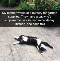 Looking for new funny animal pictures? Well, check these latest 30 funny animal pictures with captions that will make you Funny Animal Memes, Cute Funny Animals, Funny Animal Pictures, Cute Baby Animals, Cat Memes, Funny Cute, Cute Cats, Funny Monkeys, Funny Humor