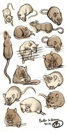 Rat art - tis a lovely example of practicing a subject manner in a learning/obse. - Rat art – tis a lovely example of practicing a subject manner in a learning/observing nature. Animal Sketches, Animal Drawings, Art Sketches, Art Drawings, Drawing Art, Animals And Pets, Baby Animals, Cute Animals, Strange Animals