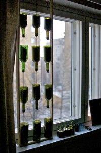 Window farming - This is it. Wine bottles.