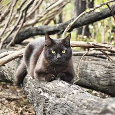She may only be a rescue cat but this little black cat has travelled more than 50,000kms around Australia in a campervan with her owner. Willow the cat […]