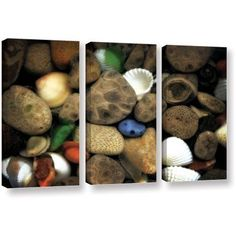 ArtWall Kevin Calkins Petoskey Stone Collage Iii 3-Piece Gallery-Wrapped Canvas Set, Size: 24 x 36, Brown
