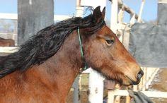 Horse Number: 6936, Image Name:6936t.jpg