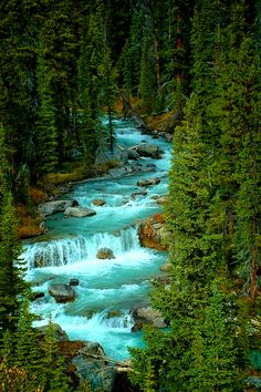 Jasper national park,Alberta Canada.