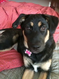 Lucy, approximately 6 months.  December 2014