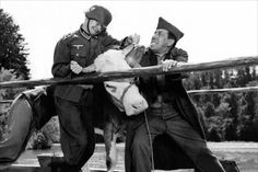 """Fernandel dans """" La vache et le prisonnier """""""