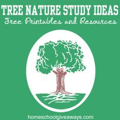 Tree Nature Study Ideas: FREE Printables and Resources