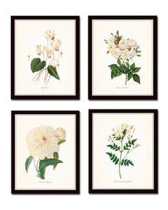 White Botanical Print Set No. 2, Giclee, Art Prints,Botanical Print, Wall Art, Prints, Botanical Illustration, Cottage Decor, White Flowers