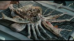 Facehugger autopsy