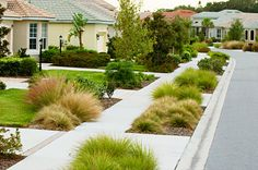 Florida friendly landscaping - drought tolerant, local natives