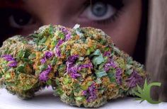 Rainbow Bud    calmed420.com