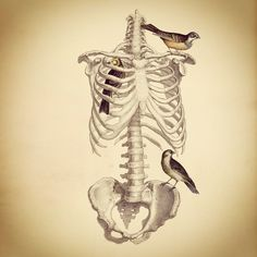 Skeleton torso and birds (I don't know who the artist is)