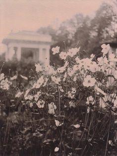 Photograph monochromatic landscape garden White flowers nature sepia Polaroid