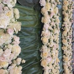 When you put together Countless number of roses, garden roses...anemone...many hours of work and many designers working  together this is how the final product looks like🌿so fresh and perfect for #brianandmark #brianandmarksintrigueteam @intrigue_designs @beeinspiredevents #weddings #flowerdesigner #designer #blooms #flowerwall #perfectwall #tallestflowerwallever #whiteandgreen #elegante #gardenroses #whiteroses #anemone #manydesigners #weddingdesign #evedeso #eventdesignsource - posted by…