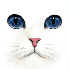 white cat research artist? ♥♥ white cat research artist? Images Victoriennes, White Cats, Black Cats, White White, Art And Illustration, Crazy Cats, Animal Drawings, Rock Art, Cat Art