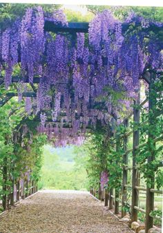 For Arches And Pergolas Types of Plants for Arches and Pergolas.another plant I want, Wisteria, over pergola - MariTypes of Plants for Arches and Pergolas.another plant I want, Wisteria, over pergola - Mari Backyard Pergola, Backyard Landscaping, Pergola Kits, Pergola Ideas, Pergola Plans, Pergola Roof, Covered Pergola, Steel Pergola, Patio Ideas