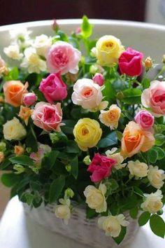 Ideas Flowers Boquette Red Floral Arrangements For 2019 Beautiful Rose Flowers, Beautiful Flower Arrangements, Love Rose, Amazing Flowers, Fresh Flowers, Floral Arrangements, Beautiful Flowers, Colorful Roses, Romantic Roses