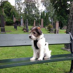 heididahlsveen:  #atsjoo betrakter døden fra en benk. #hund #dog #puppy #valp