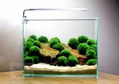 """3 Marimo Moss Ball Low light Nano Live Aquarium Plant (1 1/8"""" - 1 1/4"""")"""