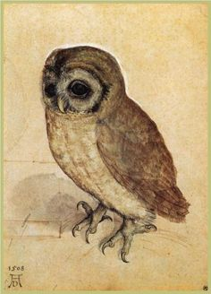 Albrecht Durer The Little Owl Stunning reproduction of an antique renaissance watercolor painting. It features a young owl painted by the famous century artist Albrecht Durer. Art And Illustration, Vintage Illustrations, Albrecht Durer, Owl Art, Bird Art, Art Amour, Little Owl, Art Design, Art History