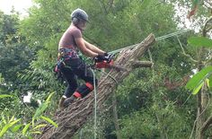Tree Surgeons – Get Domestic/Commercial Tree Work Done By Experts!-If you require domestic or commercial tree work, you can search online for tree surgeons Slough that offer a number of tree removal and ground clearance services at competitive prices! Tree Surgeons, Outdoor Power Equipment, Commercial, Knowledge, Number, Search, Searching, Garden Tools, Facts
