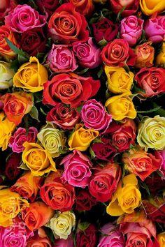 Flower Background Wallpaper, Flower Phone Wallpaper, Flower Backgrounds, Flower Wallpaper, Beautiful Rose Flowers, My Flower, Pink Flowers, Beautiful Flowers, Rosa Rose