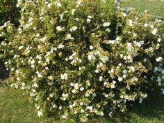 Сервис обмена информацией для садоводов Мой Сад. Делитесь фотографиями…