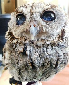 This blind owl amazes me every time I look at it.