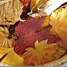 Folhas desidratadas, como manter as cores naturais