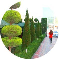 Kopsht i gjelber ne Hotel Union ne Kamez, Tirana, Albania  http://hotelunion.al/garden-2/