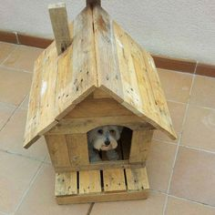 Reclaimed pallets used to make a warm and comfy kennel for your best friend