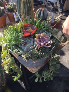 "<p>Junk Bonanza is thrilled to have Wendy McMonigle of SheShed by WM Design House provide ongoing demonstrations and assistance at the ""succulent potting bar"" at our #sandiego show, Feb. 19-20! We wanted to share a little bit about her -- you'll definitely want to stop by and select some…</p>"