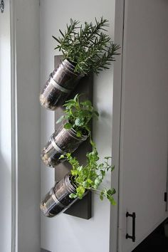 mason jar planter is part of Mason jar herb garden No space for a garden No problem! This wallmounted piece is a charming and rustic way to grow herbs indoors The mason jars and hanging hardware - Mason Jar Herbs, Mason Jar Herb Garden, Mason Jar Planter, Diy Herb Garden, Mason Jars, Herbs Garden, Pot Mason, Garden Ideas, Wall Herb Garden Indoor