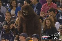 Fan Dressed in Bear Costume Shows Up at Padres Game