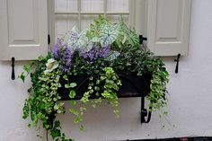flower window box charleston | Charleston Window Flower Box