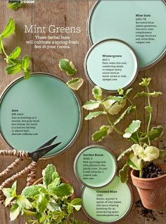 color-mint-green-farbnuansen-inspiration-from-the-natural-mint.jpg (600×807)