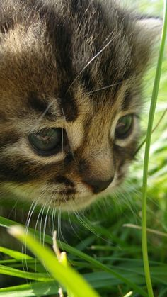 kitten, cat, grass, green, furry