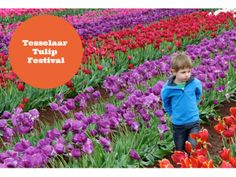 This annual tulip festival is held every year from mid September till early October in the Dandenong Ranges