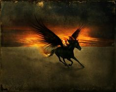 Pretty Pegasus #horses #fantasy