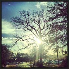 Instagram photo by @University of Arkansas at Little Rock via ink361.com