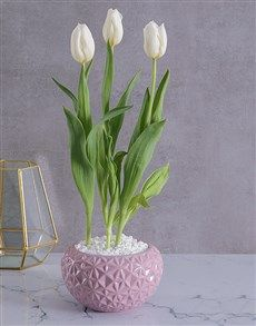 gifts: White Tulip in Pink Geo Planter! Womens Day Gift Ideas, Same Day Delivery Service, White Tulips, Ladies Day, Geo, Glass Vase, Planters, Pink, Gifts