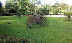 Parque de la Paloma Benalmadena, Stepping Stones, Outdoor Decor, Home Decor, Parks, Animales, Stair Risers, Decoration Home, Room Decor