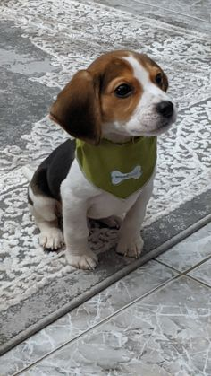 Kittens And Puppies, Cute Dogs And Puppies, I Love Dogs, Doggies, Beagle Breeds, Fat Animals, Cute Beagles, Cute Baby Dogs, Dog Sculpture