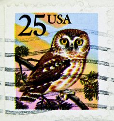 owl / USA postage stamp