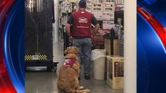 12/6/16 A Lowe's in Texas is warming hearts across the nation with its decision to hire its latest two employees: a disabled veteran and his service dog.